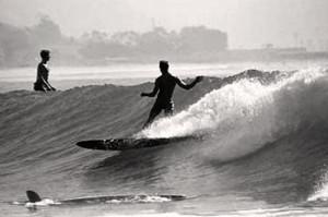 Виндсерфинг и серфинг