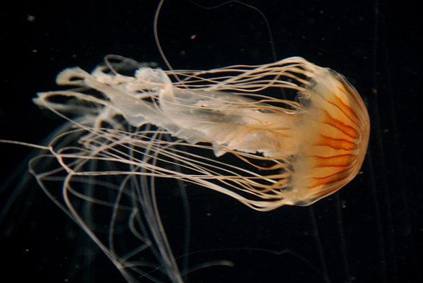 05-meduza