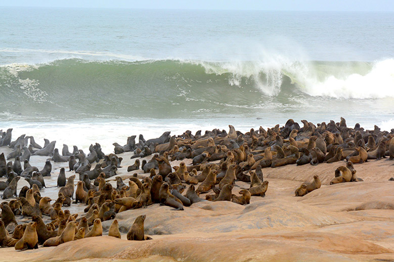 серфинг, доска, ветер, море, волна